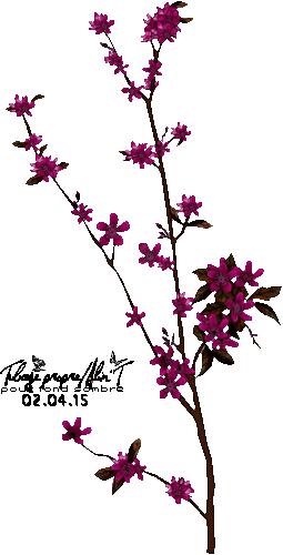 Papillond avril